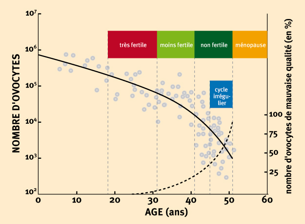 fertilite femme age
